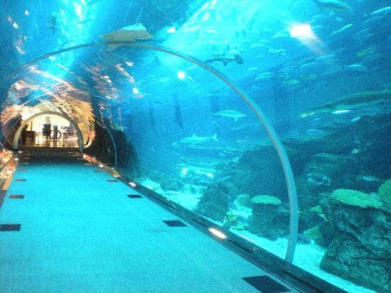 dubai aquarium and underwater zoo travel tips for around the world