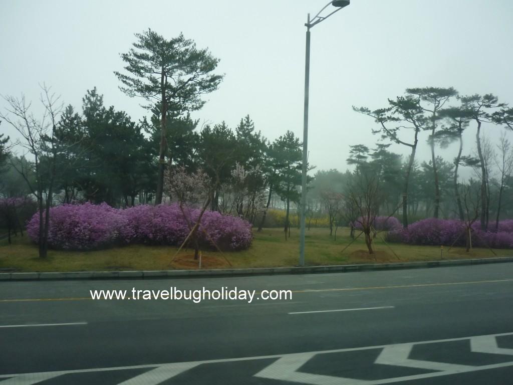 Spring in Seoul, Korea
