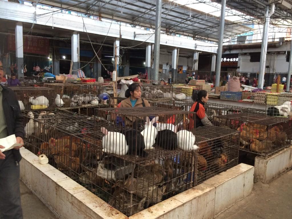 Yangshuo, China, meat market,